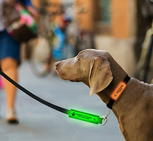 LED Pet Leash Wrap